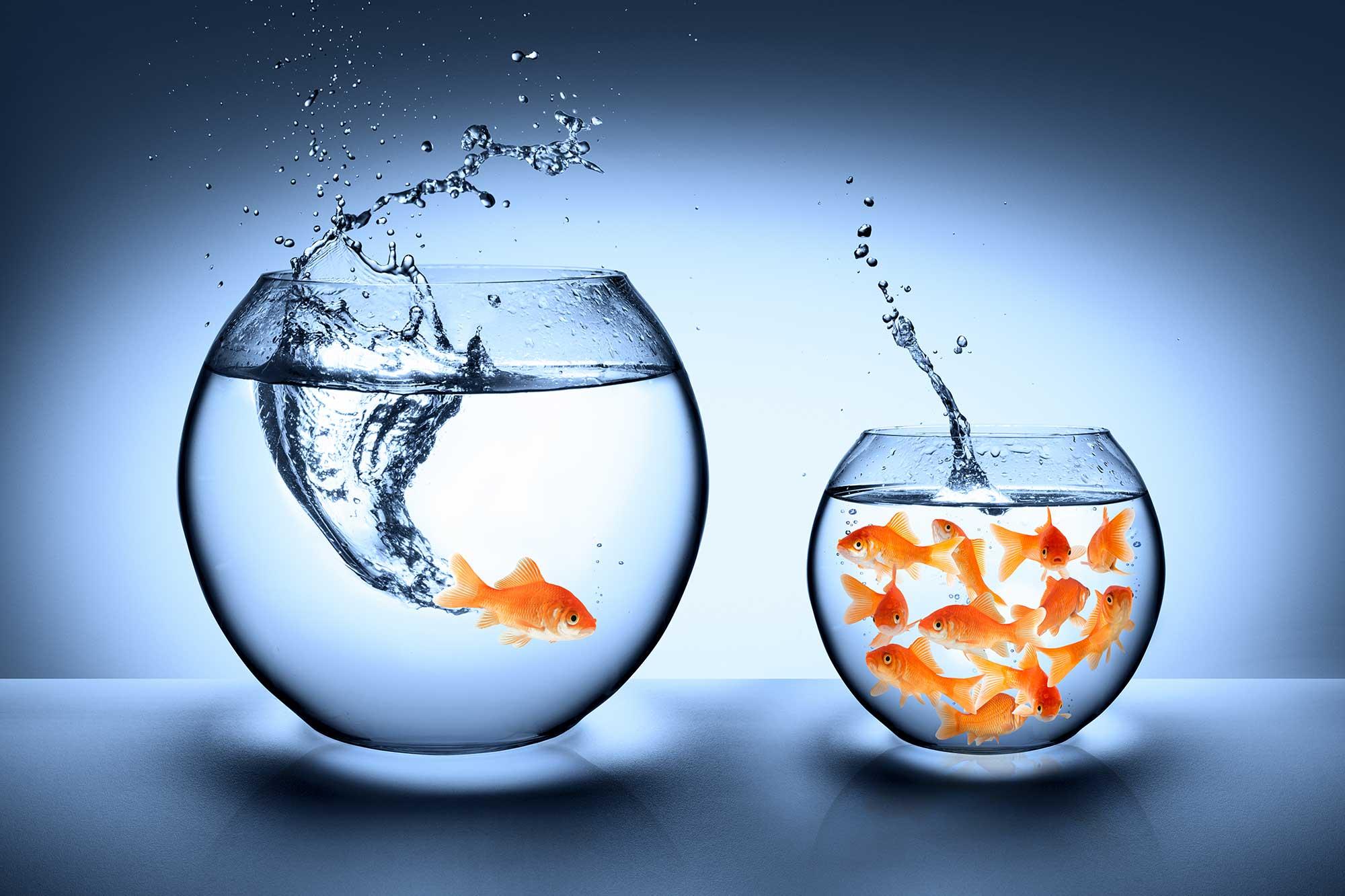 Infographie - poissons qui sautent d'un auquarium